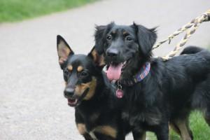 Senta (rechts) und Leila (links)
